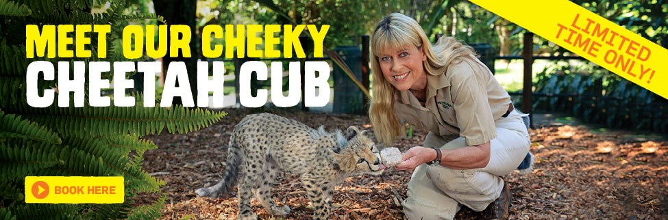 Meet our cheeky Cheetah cub