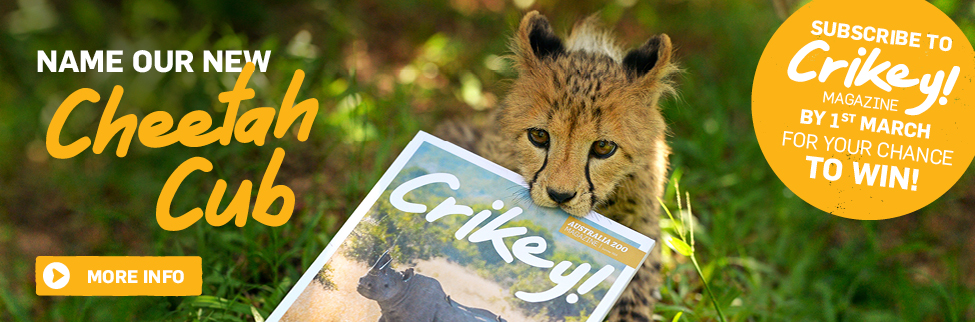Crikey! Club Cheetah naming competition