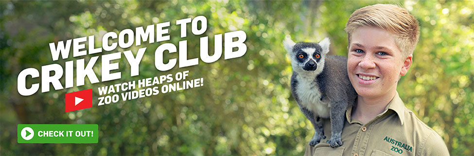 Crikey Club - Check out zoo life behind the scenes!
