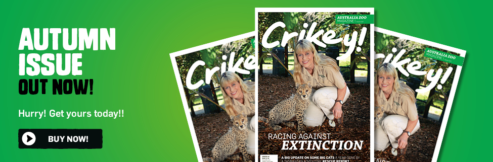 Crikey Magazine Edition 41 Autumn 2017