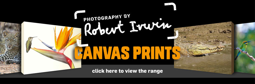Robert Irwin Canvas Prints
