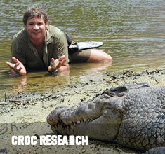 crocodile research