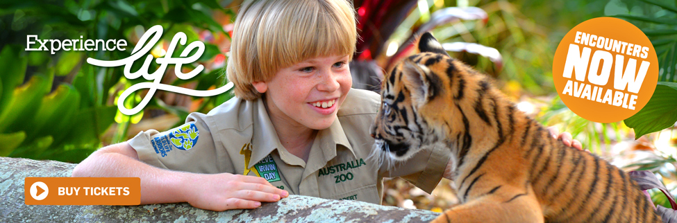 Tiger Cub Encounters Available Now!